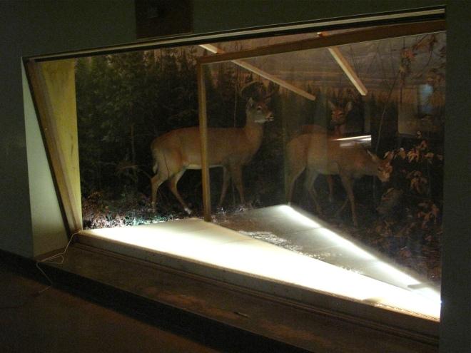 Deer Diorama 02