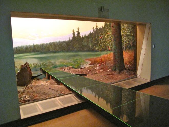 Moose Habitat 01