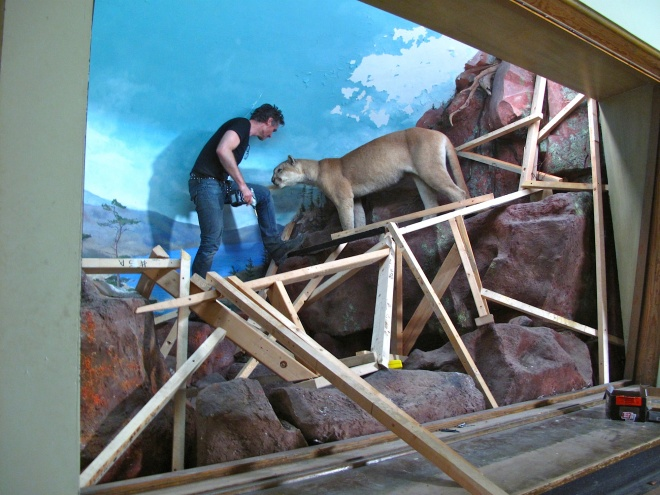 Mountain Lion 01