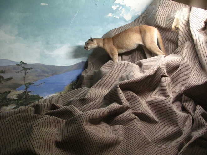 Mountain Lion 06